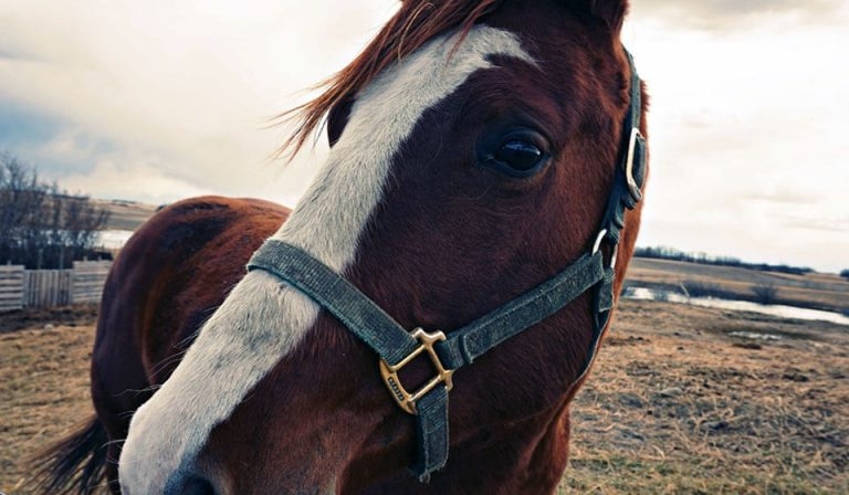 Get to Know Your Horse Better