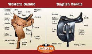 Saddle Trial Policy